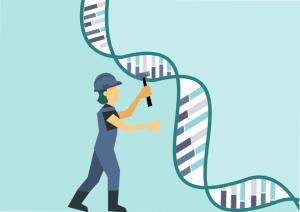 Prudencia para la aplicación clínica de los sistemas CRISPR en terapia génica in vivo