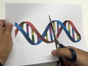 No es lo mismo un transgénico que un organismo editado genéticamente