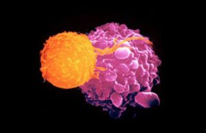 Seguridad de las herramientas CRISPR para futuros tratamientos contra el cáncer