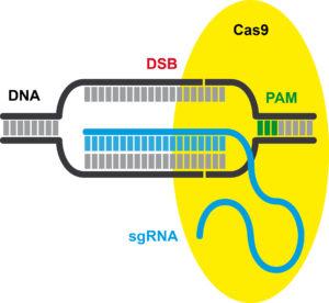 Sigue la batalla por las patentes CRISPR