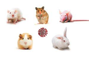 El papel de los modelos animales en la investigación sobre la COVID-19