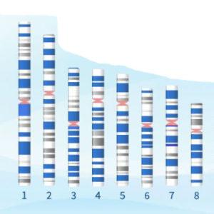 El tamaño de nuestro genoma