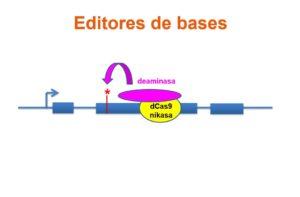 Editores de bases o cómo transformar las CRISPR en herramientas terapéuticas
